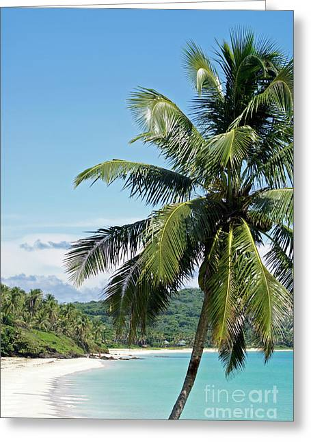 Greeting Card featuring the photograph Big Corn Island Palm Tree Nicaragua by John  Mitchell