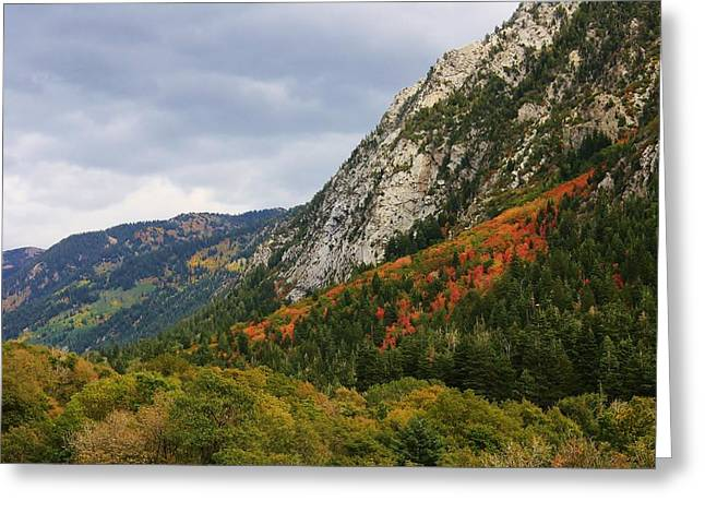 Big Cottonwood Canyon 2 Greeting Card by Bruce Bley