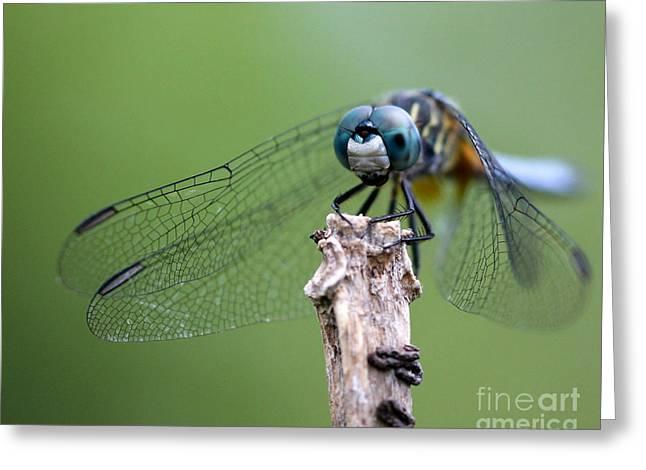 Big Eyes Blue Dragonfly Greeting Card by Sabrina L Ryan