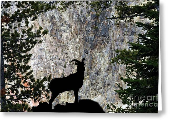 Greeting Card featuring the photograph Big Horn Sheep Silhouette by Dan Friend
