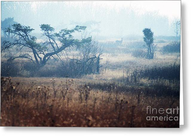 Big Meadows In Winter Greeting Card by Thomas R Fletcher