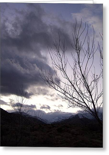 Big Morongo Canyon Greeting Card by Christine Drake