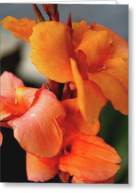 Big Orange Flower Greeting Card by Lorraine Devon Wilke