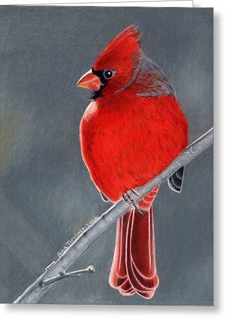 Greeting Card featuring the drawing Big Red Northern Cardinal by Ana Tirolese