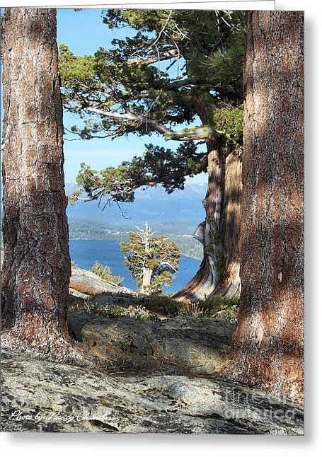 Big Trees Little Tree Greeting Card