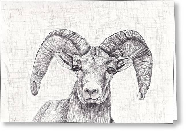 Bighorn Sheep Greeting Card by Nicole Grattan