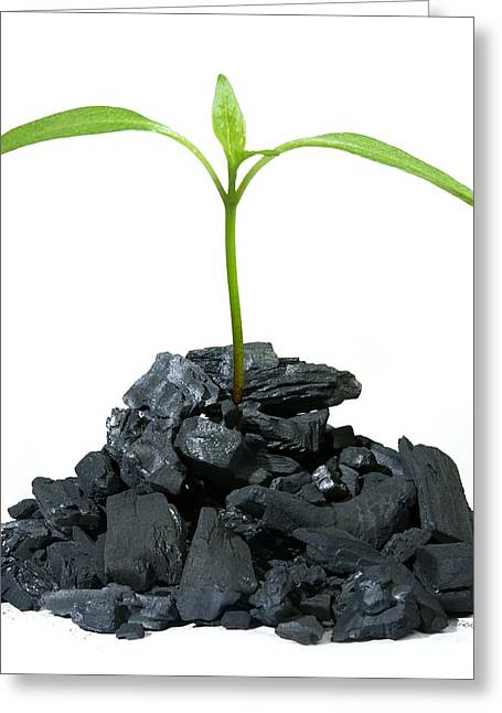 Biochar Plant Growth, Conceptual Image Greeting Card by Victor De Schwanberg