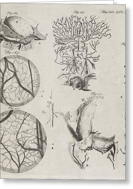 Biological Illustrations, 18th Century Greeting Card by Middle Temple Library