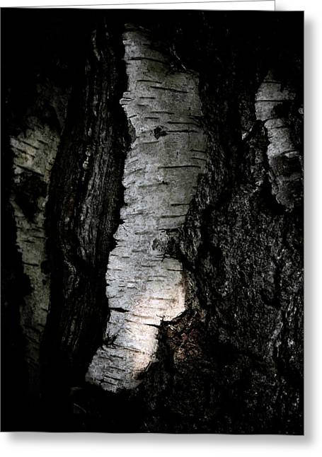 Birch Abstraction Greeting Card by Odd Jeppesen