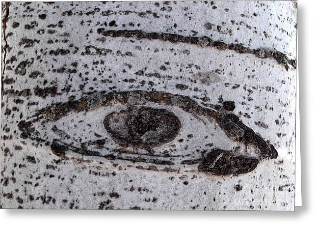 Birch Bark All-seeing Eye Greeting Card by Janeen Wassink Searles
