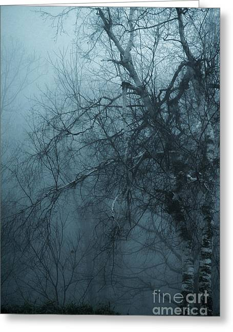 Birch Tree In Fog Greeting Card