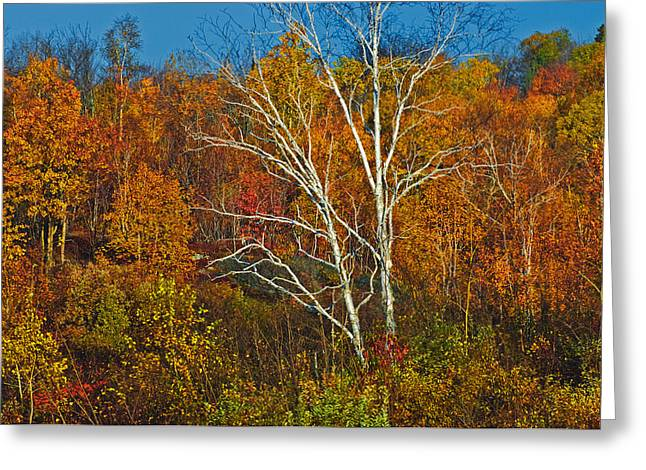 Birch Tree Surrounded By Colorful Greeting Card by Mike Grandmailson