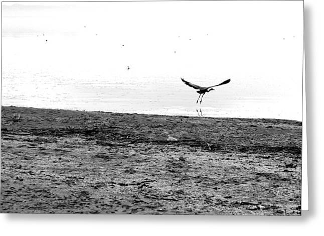 Bird And Beach Greeting Card