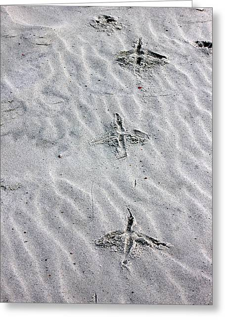 Bird Foot Prints Greeting Card