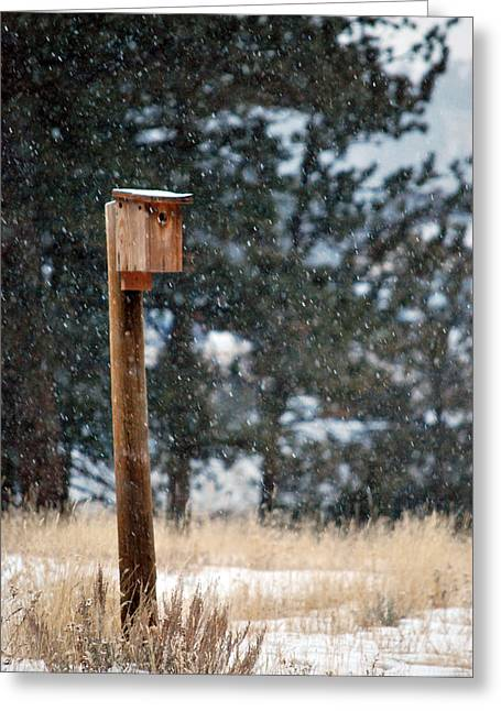 Bird Home Greeting Card