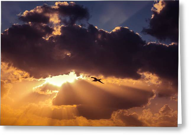 Bird In Sunrise Rays Greeting Card