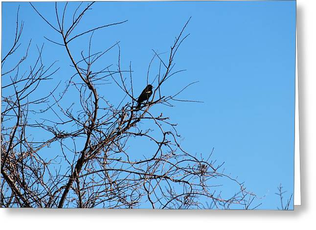 Bird In Tree Greeting Card