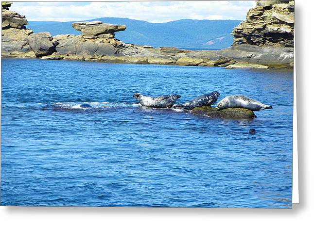 Bird Island Seals Greeting Card