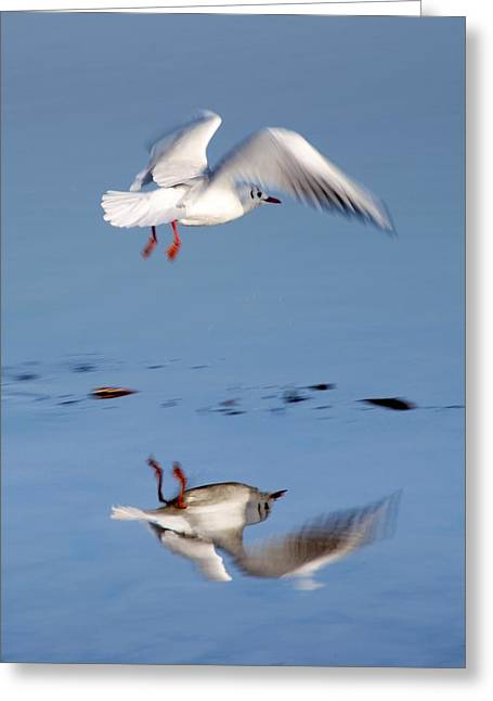 Bird Landing Greeting Card