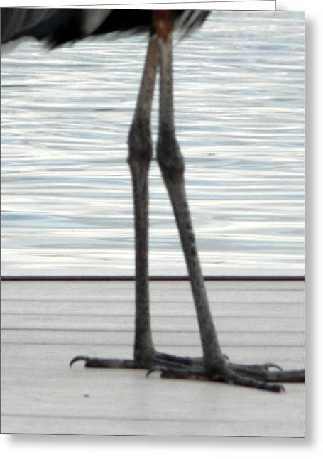 Bird Legs Greeting Card by Christy Usilton