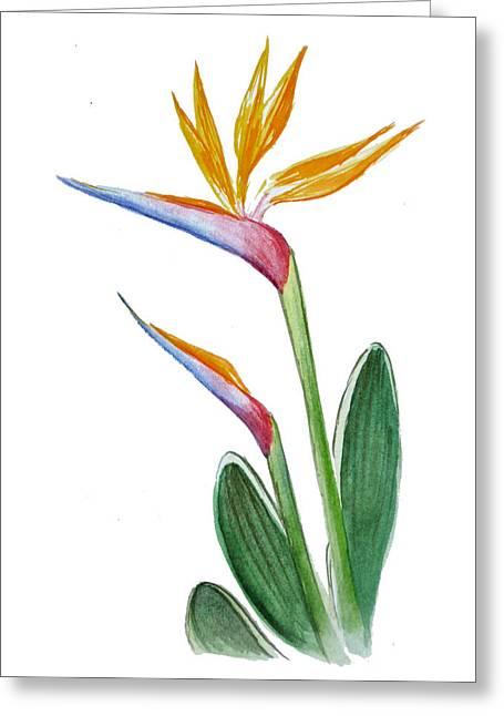 Bird Of Paradise Card Greeting Card by Irina Sztukowski