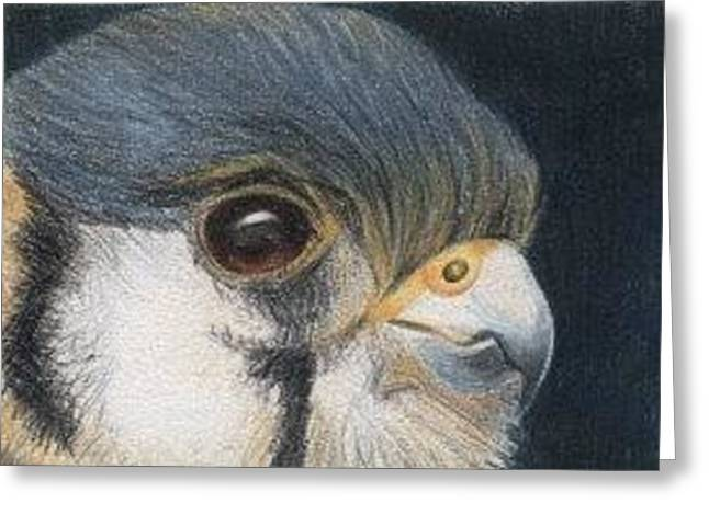 Greeting Card featuring the drawing Bird Of Prey - Aceo by Ana Tirolese