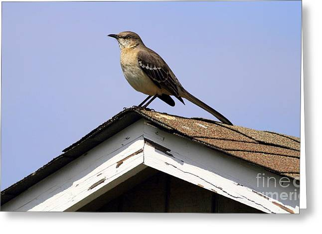 Bird On A Roof Greeting Card