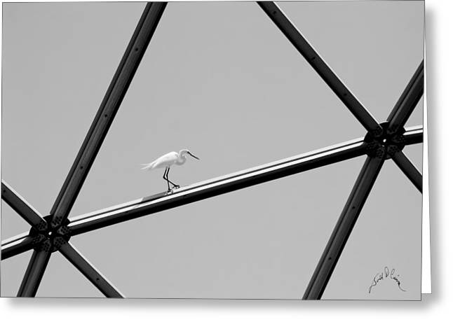 Bird On Structure Greeting Card
