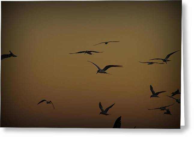 Bird Sky Greeting Card by James Granberry