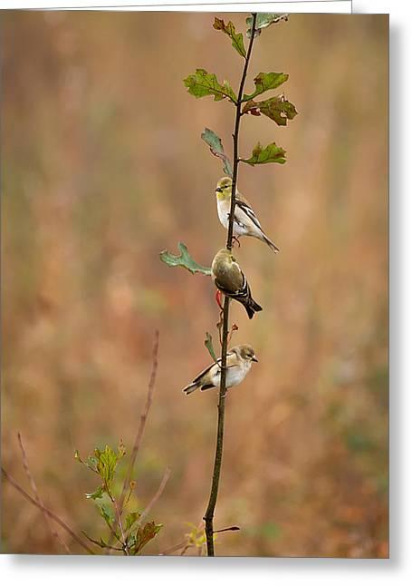 Bird Stack Greeting Card by Dan Wells