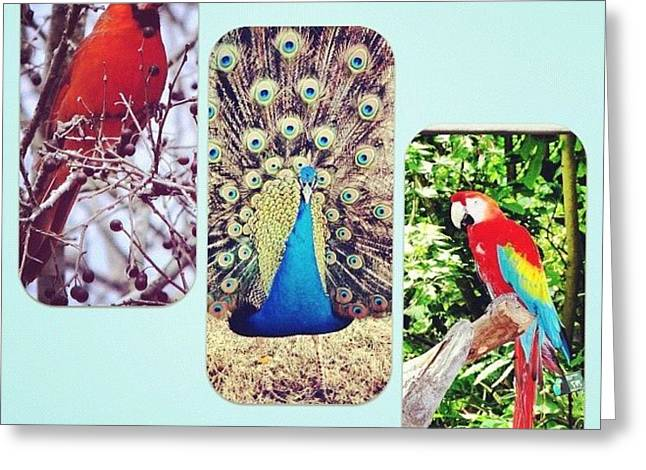 Birds Around Houston Greeting Card