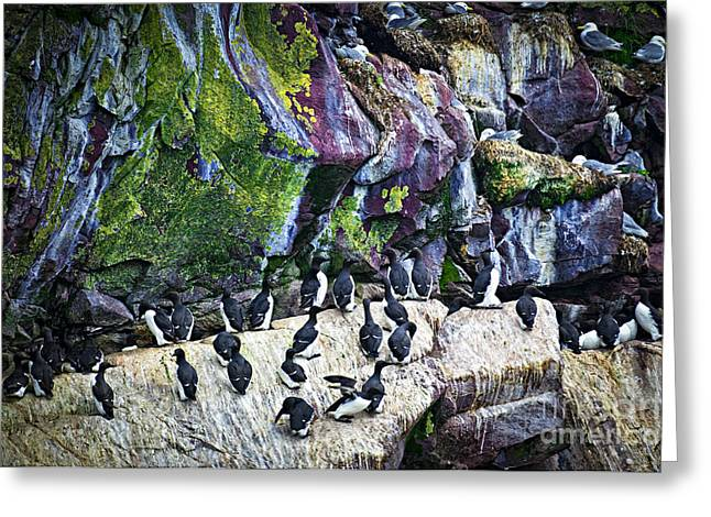 Birds At Cape St. Mary's Bird Sanctuary In Newfoundland Greeting Card by Elena Elisseeva