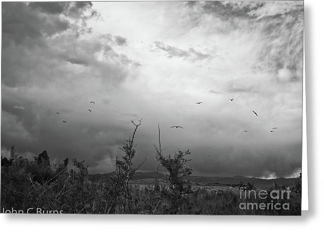 Birds At Mono Lake Greeting Card