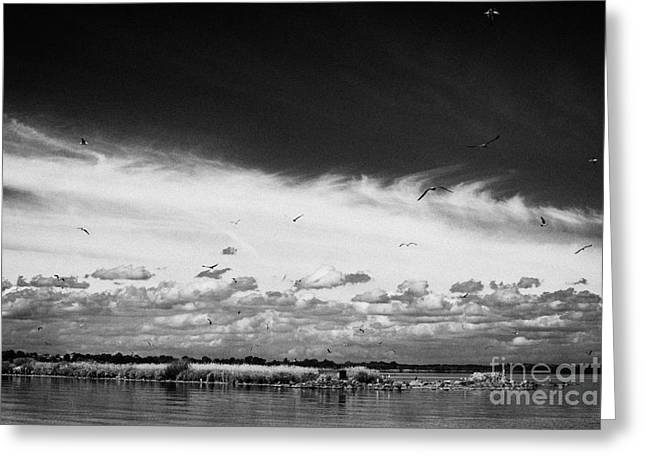 Birds Flying Above Small Roes Island One Of The Many Flat Shallow Areas Of Lough Neagh  Greeting Card