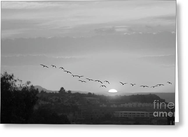 Greeting Card featuring the digital art Birds Flying Into The Sunset by John  Kolenberg