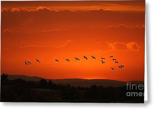 Greeting Card featuring the digital art Birds In A Crimson Sunset by John  Kolenberg