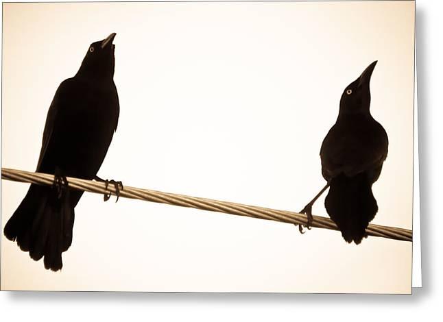 Birds In Black Greeting Card