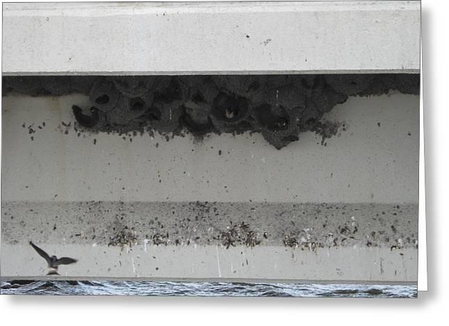 Birds Nest Under The Bridge. Greeting Card