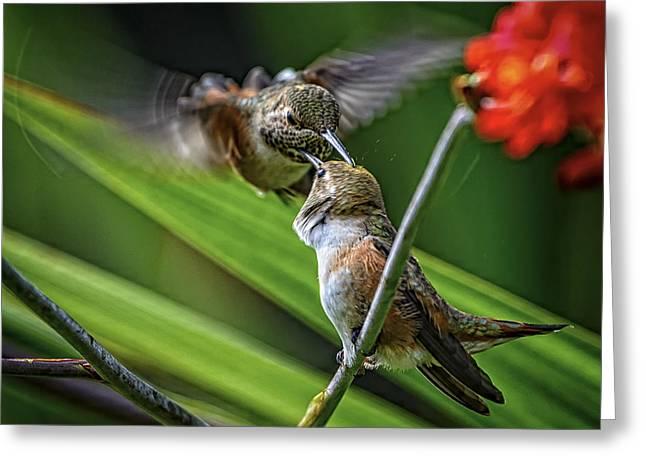 Birds Of Bc - No. 32 - Two Rufous Hummingbirds - Selasphorus Ruf Greeting Card by Paul W Sharpe Aka Wizard of Wonders