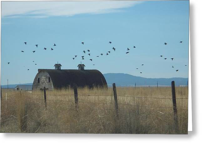 Greeting Card featuring the photograph Birds Over Barns by Debbi Saccomanno Chan