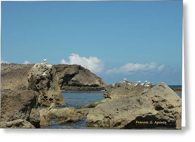 Birds Over The Rock Greeting Card by Frances G Aponte