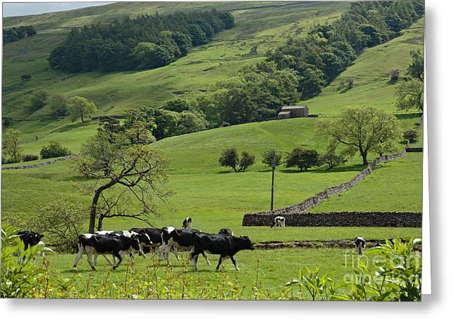 Bishopdale In The Yorkshire Dales National Park Greeting Card