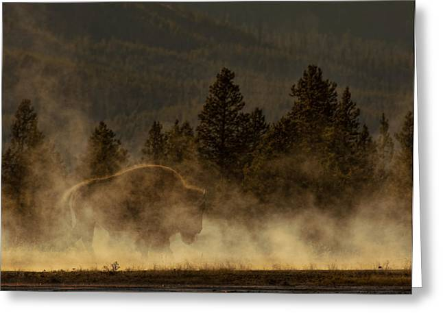 Bison In The Mist Greeting Card