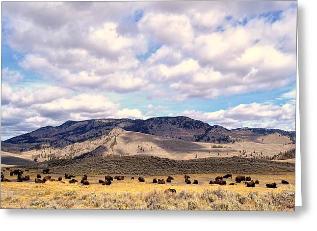 Greeting Card featuring the photograph Bison  by Kelly Reber