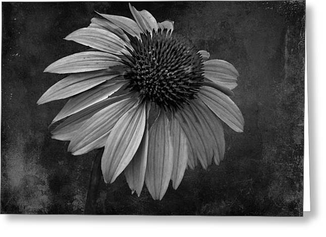 Bittersweet Memories - Bw Greeting Card by David Dehner