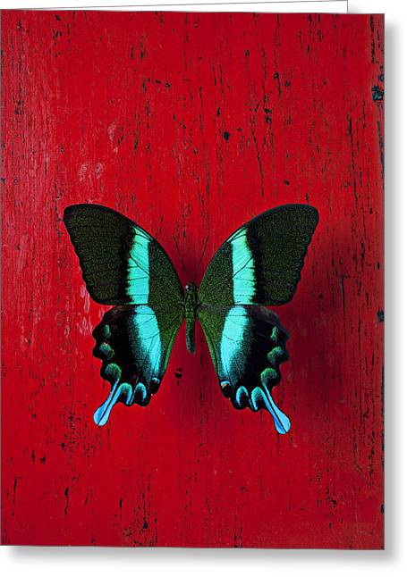 Black And Blue Butterfly  Greeting Card by Garry Gay