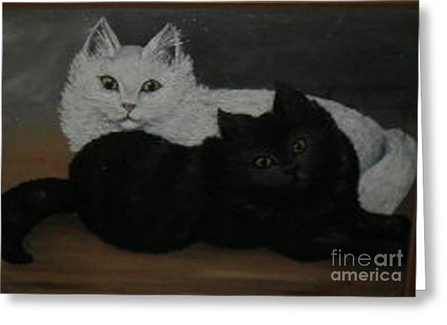 Black And White Cats Greeting Card by Hilda Schreiber