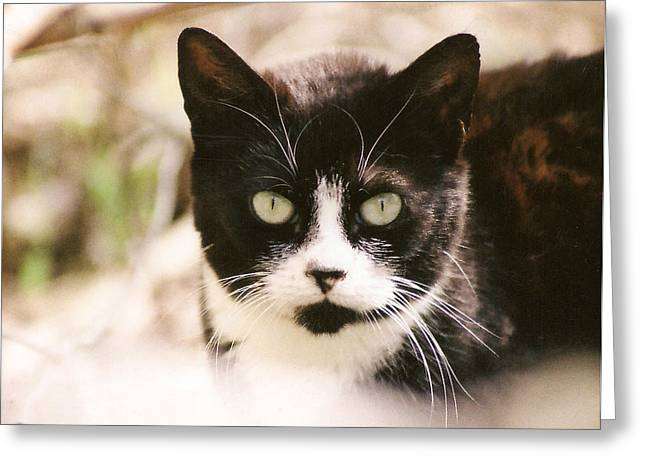 Black And White Feral Cat Greeting Card
