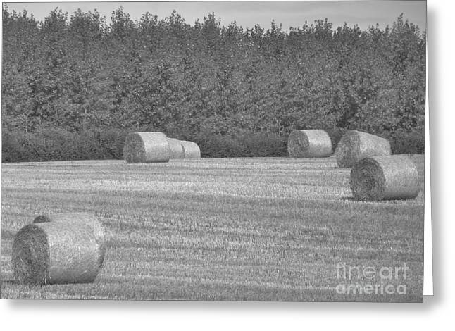 Black And White Hay Bales Greeting Card by Andrew May