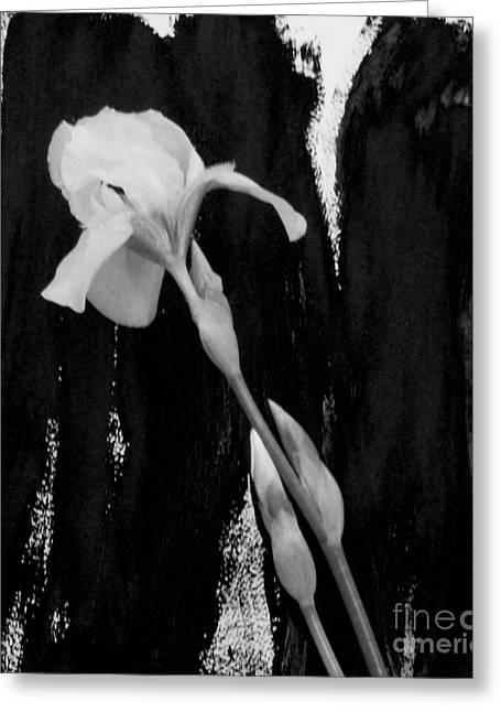 Black And White Iris Greeting Card by Marsha Heiken